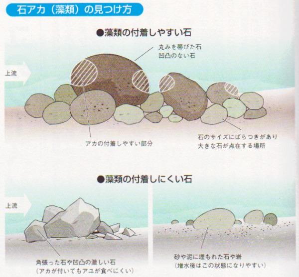 鮎釣り 石アカの見つけ方