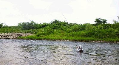 阿仁川 鮎釣り