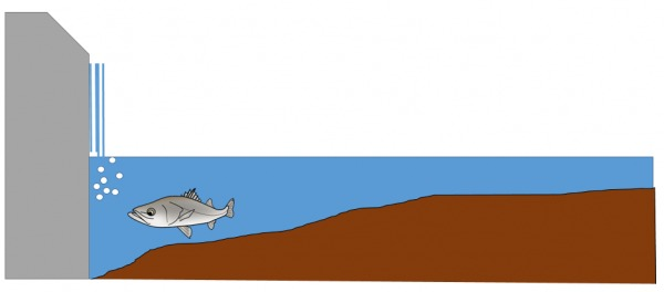 堰堤でのシーバス釣り