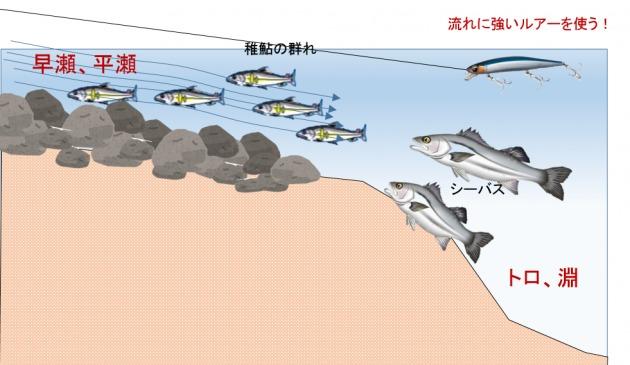 若鮎 パターン シーバス釣り2