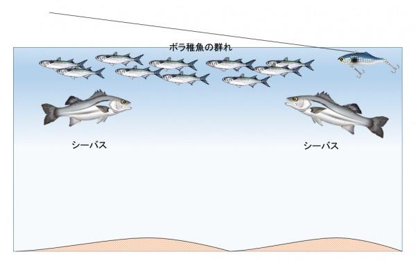 ボラ パターン シーバス釣り2