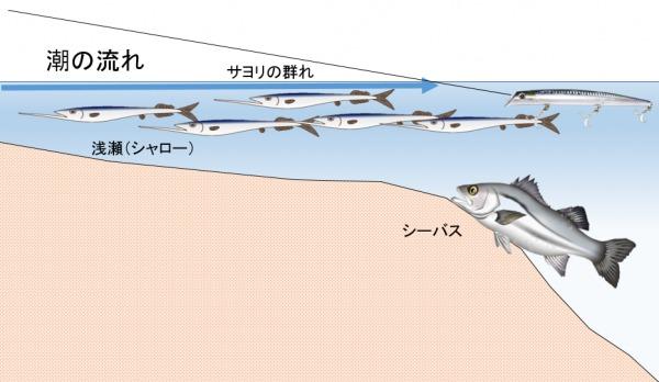 サヨリパターン シーバス釣り2