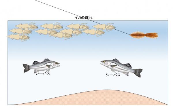 イカ パターン シーバス釣り