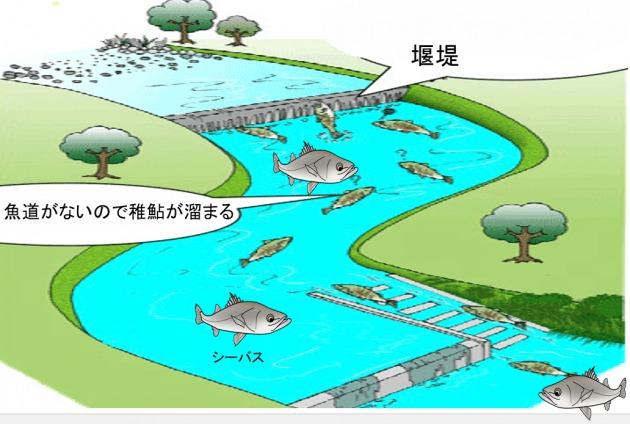 稚鮎パターン シーバス釣り2