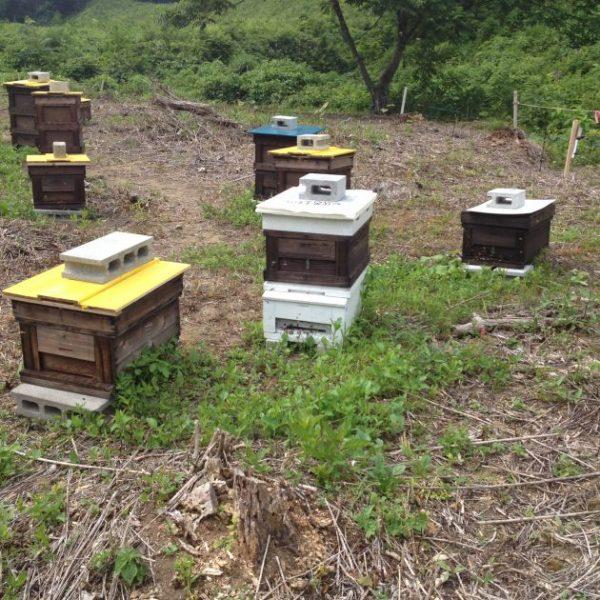 魚取川 ミツバチ 養蜂場