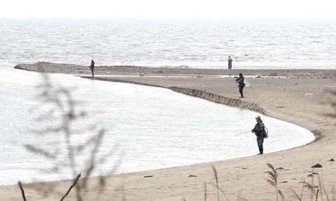 赤川 河口 シーバス