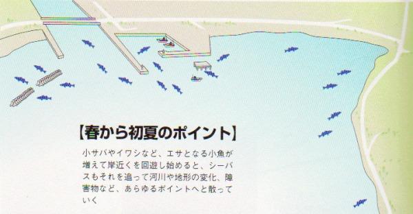 シーバス釣り 春~夏