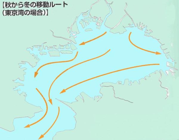シーバス釣り 秋~冬