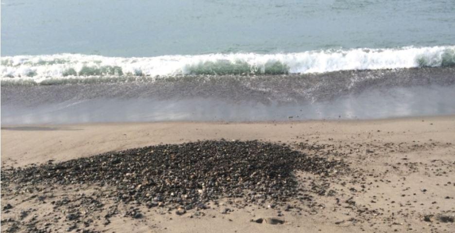 サーフ 地形の変化 海サクラマス