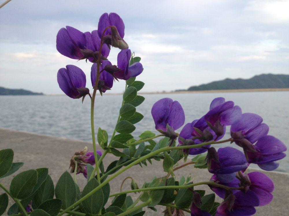 追波川 月浜