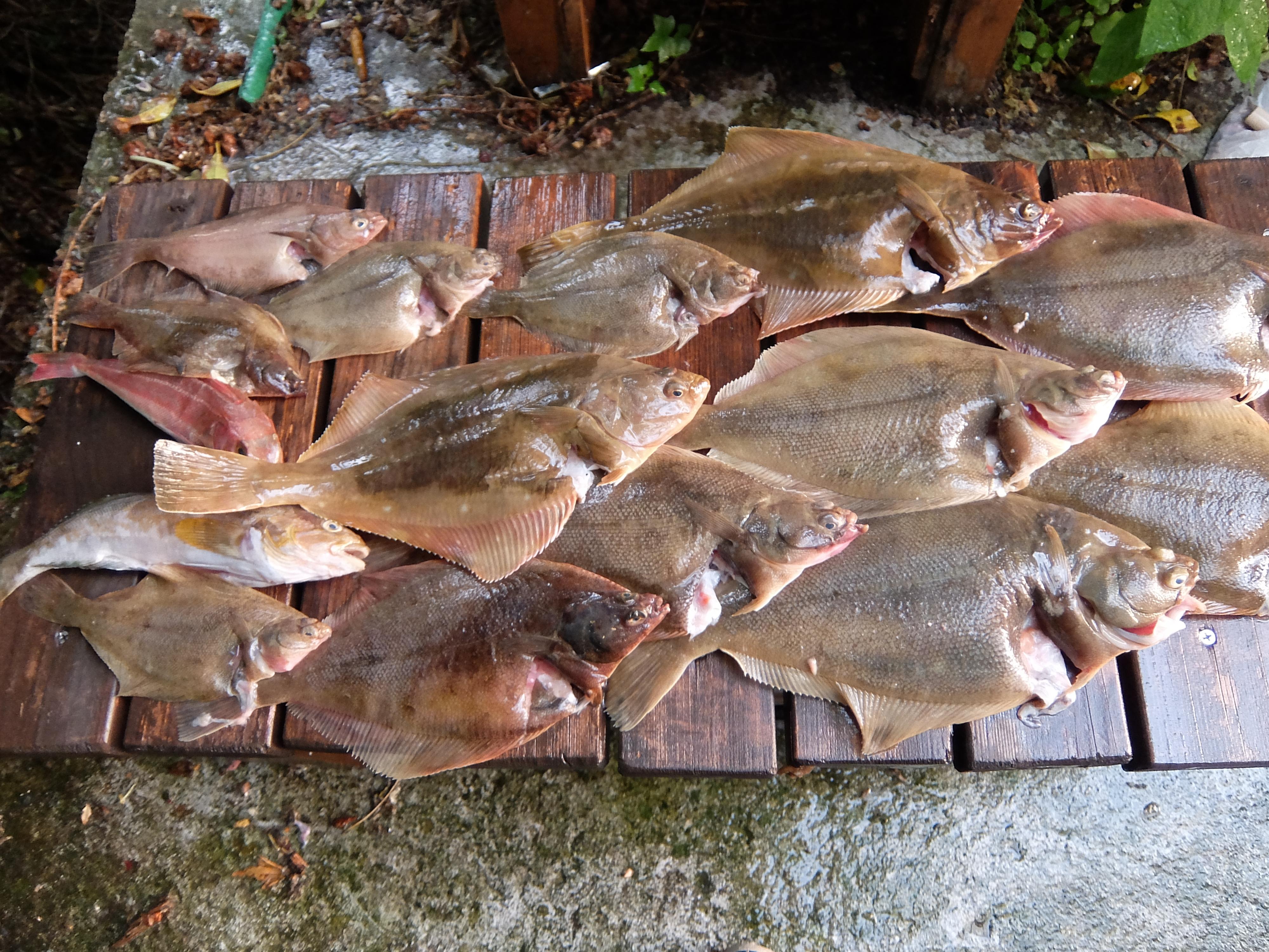 仙台 大型漁礁 釣果