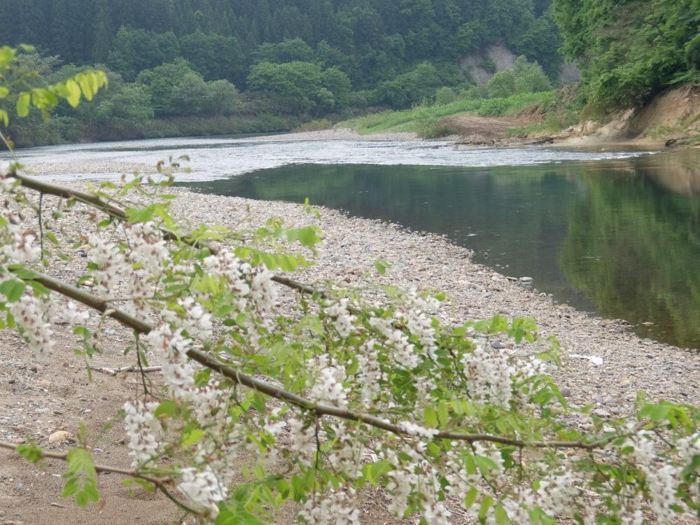 鮭川 米橋 下流 大淵