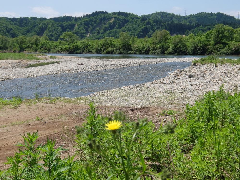 泉田川&鮭川 合流点