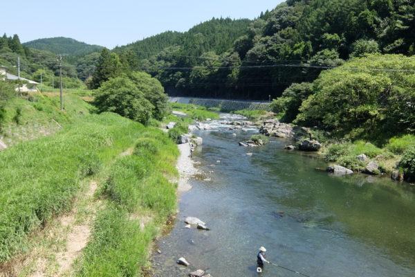 気仙川 田ノ上橋 鮎釣り