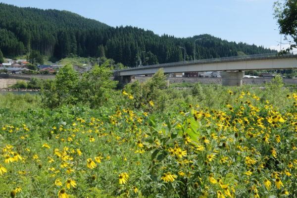 米代川 銀杏橋