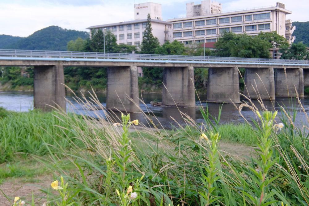 米代川 大滝温泉 鮎釣り