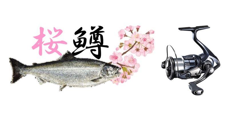 サクラマス、トラウト釣り用スピニングリール